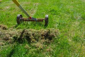 Mech na trawniku i na kostce brukowej – jak go usunąć? Poradnik