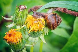5 sposobów zwalczania ślimaków w ogrodzie – wybraliśmy najskuteczniejsze