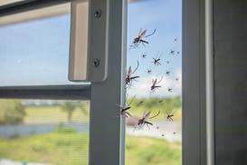 Owady latające w domu – jak się ich pozbyć? Sprawdź!