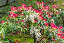 10 najpiękniejszych roślin wieloletnich do ogrodu i na działkę – oto nasze typy