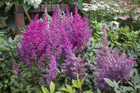 10 najpiękniejszych kwiatów ogrodowych wieloletnich – one będą cieszyć oczy wiele lat