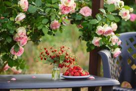 Róże eden rose – opinie, uprawa, pielęgnacja, ceny, porady