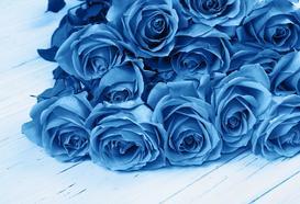 Czy istnieje niebieska róża? Jakie ma znaczenie? Poznaj ciekawe fakty