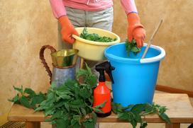 Gnojówka z pokrzyw - popularny nawóz - jak go zrobić i co nim podlewać?