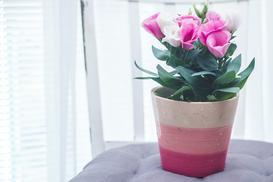 20 najlepszych kwiatów doniczkowych – są piękne i proste w hodowli