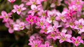 Jakie kwiaty na skalniak wybrać? Oto 10 najlepszych roślin