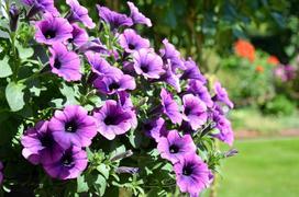 10 najlepszych kwiatów na taras - zobacz, które kwiaty sprawdzą się najlepiej