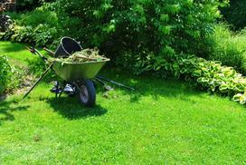 Ile rośnie trawa? Wyjaśniamy, po jakim czasie od zasiania wschodzi trawa
