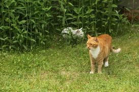 Jak odstraszyć koty z ogrodu? Praktyczny poradnik