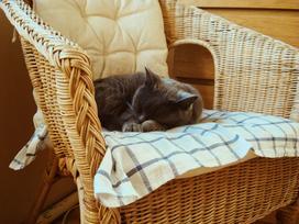 Jak kupować fotele ogrodowe? Fotele ogrodowe w komplecie czy osobno?