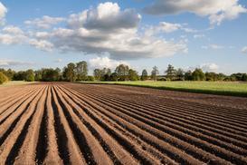 Ile kosztuje hektar ziemi w Polsce? Przedstawiamy aktualny cennik