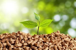 Energia biomasy – informacje, źródła, pozyskanie, opłacalność