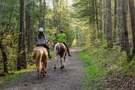 cennik jazdy konnej - zobacz ceny w lokalnych stadninach