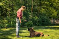 cennik szkolenia psów - zobacz lokalne ceny tresury i psich przedszkoli
