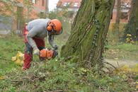 cennik wycinki drzew - zobacz lokalne ceny ścinania drzew