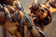 cennik zwalczania karaluchów i prusaków - sprawdź lokalne ceny