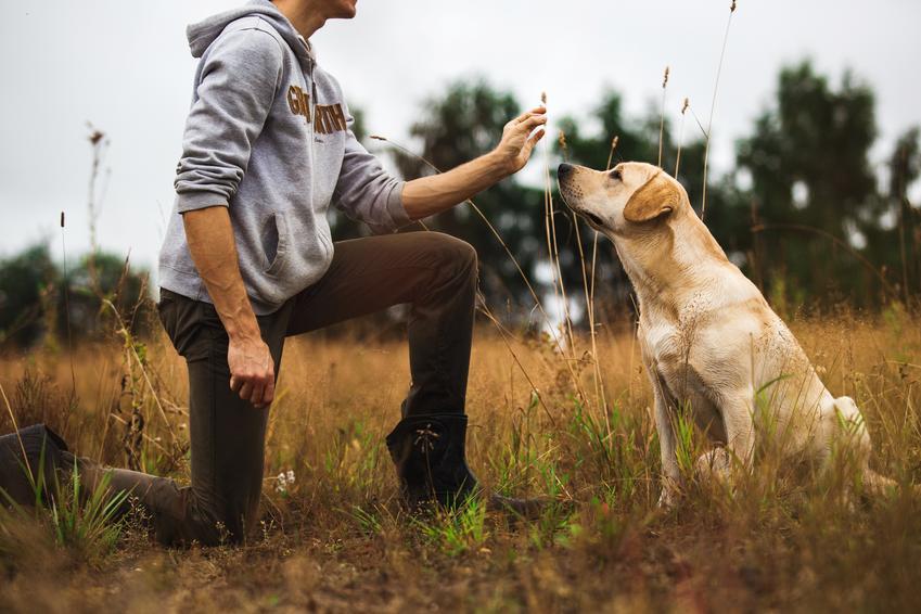 Szkolenie zwierząt