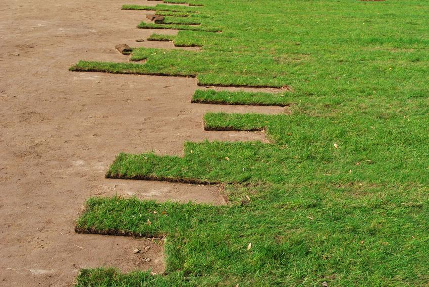 Zakładanie trawnika z rolki bez montażu siatki przeciwko kretom. Cena za usługę wykonywana na powierzchni do 100 m2.