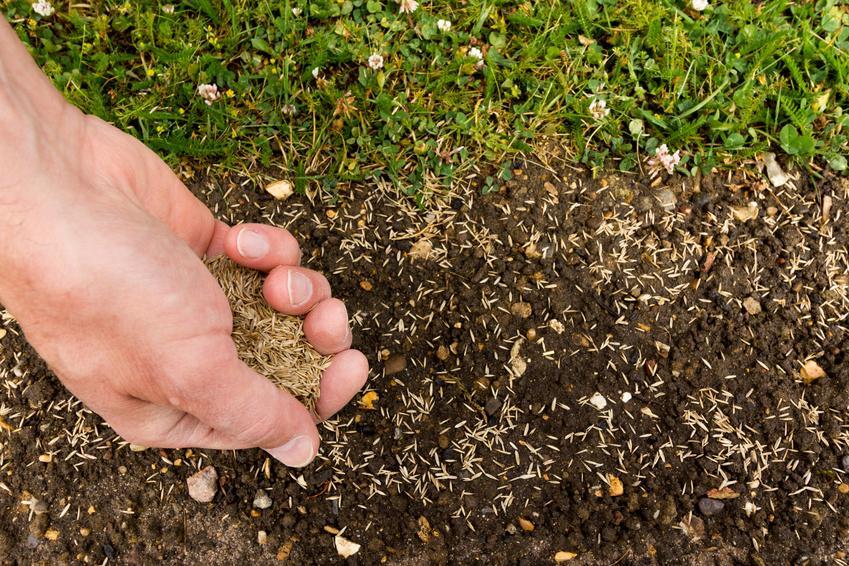 Zakładanie trawnika z siewu. Cena za usługę wykonywaną na powierzchni do 100 m2.