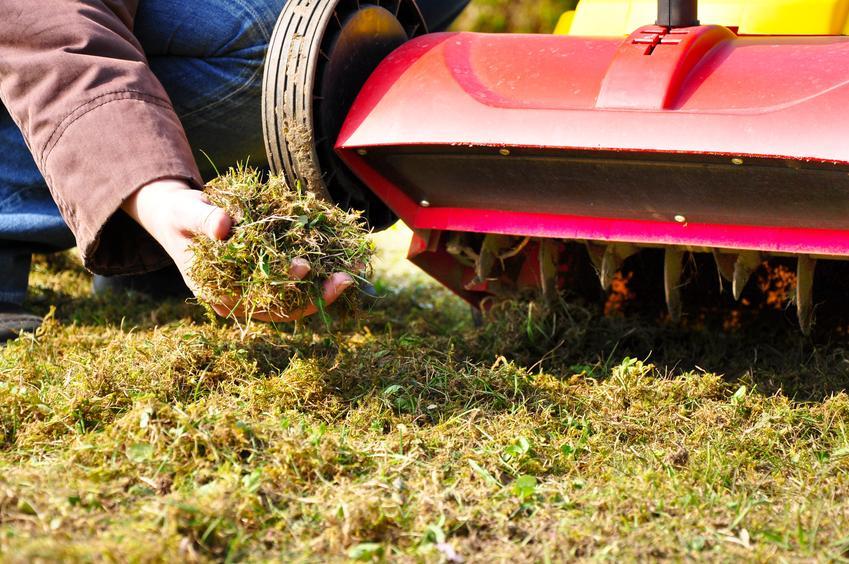Usługa wertykulacji bądź aeracji trawnika po sezonie zimowym. Cena za usługę wykonywaną na powierzchni do 100 m2.