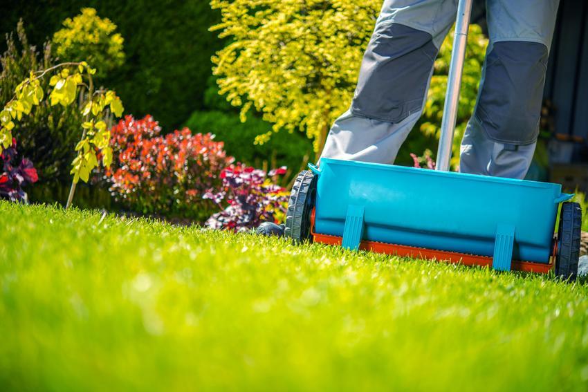 Koszt wapnowania przydomowego trawnika. Cena nie obejmuje dosiewania traw ani spulchniania podłoża.