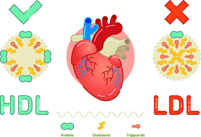 Usredniony koszt badania cholesterolu całkowitego. Świadczenia medyczne zwolnione z podatku VAT.
