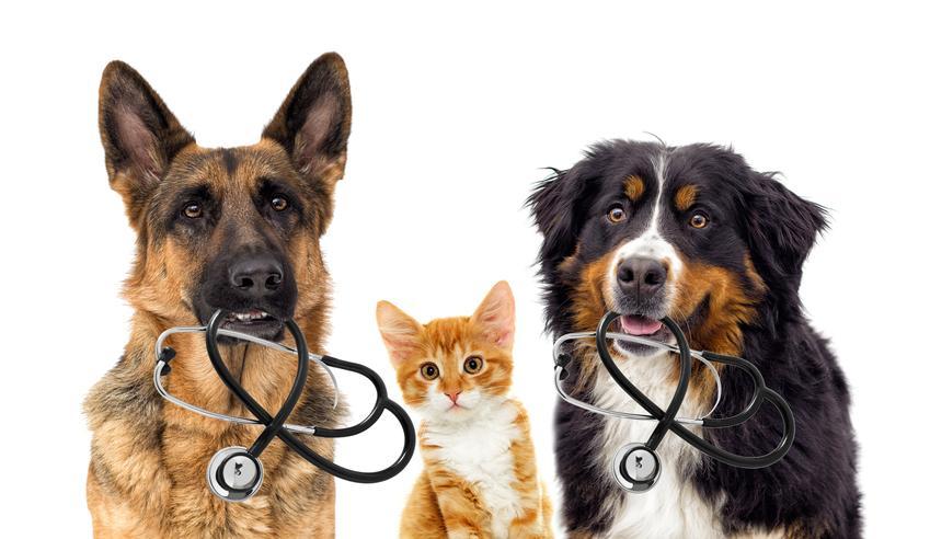 Średnia cena odrobaczania przeciwpasożytniczego. Psy do 15 kg. Odrobaczanie psów o większej masie może wygenerować wyższe koszty.