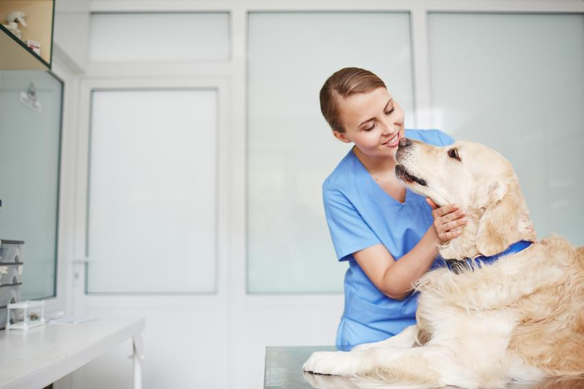 Średnia cena kastracji niewielkich psów o wadze do 10 kg. Kastracja większych psów lub suk będzie wyższa o kilkadziesiat od kilkuset złotych.