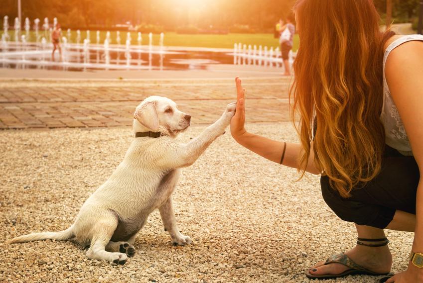 Średnia cena wykonania testów behawioralnych dla całego miotu szczeniąt. Testy wykonywane przeważnie w przypadku psów użytkowych.