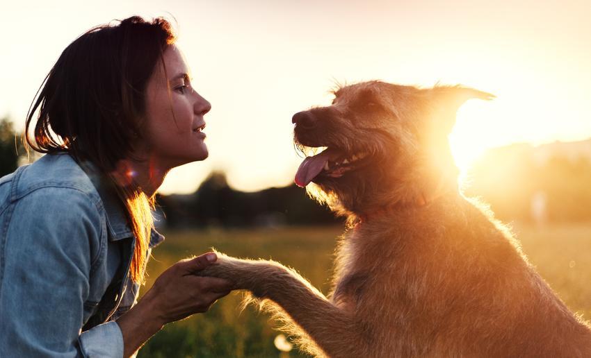 Średni koszt treningu handlingowego, czyli przygotowującego psa do brania udziału w wystawach. Cena za pełne szkolenie składające się z 10 spotkań z trenerem.