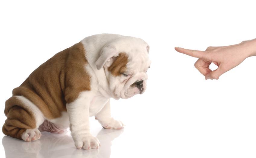 Warsztaty kształtowania, czyli nauka psich sztuczek. Zajęcia przeprowadzane zazwyczaj dla szczeniąt i młodych psów. Cena obejmuje pełny pakiet szkoleniowy, od 8 do 10 spotkań ze szkoleniowcem. Zajęcia grupowe.