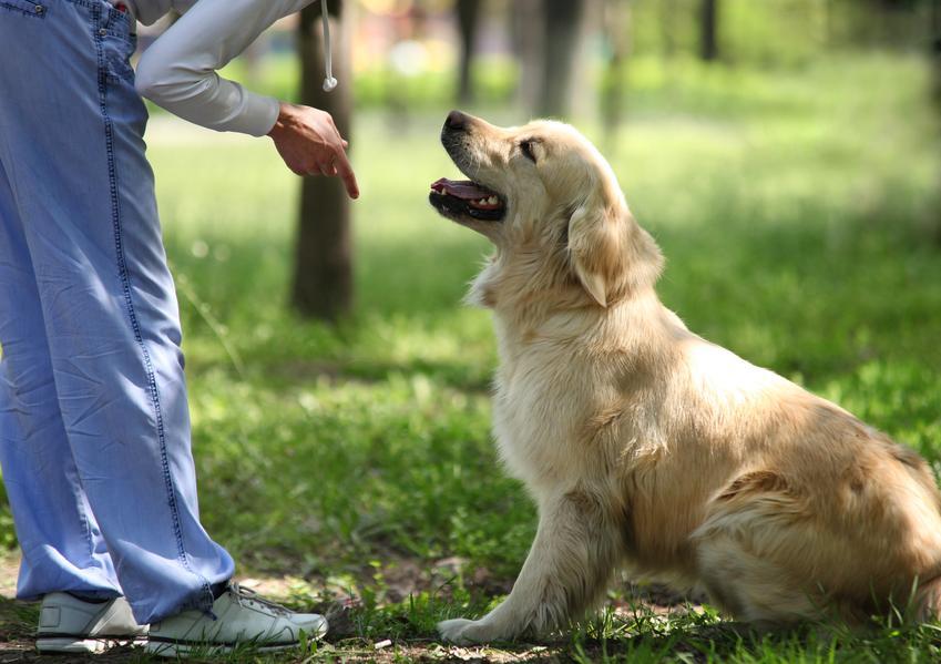 Warsztaty posłuszeństwa przygotwujące psa do warunków życia w mieście. Trening obejmuje zazwyczaj do 3 spotkań.