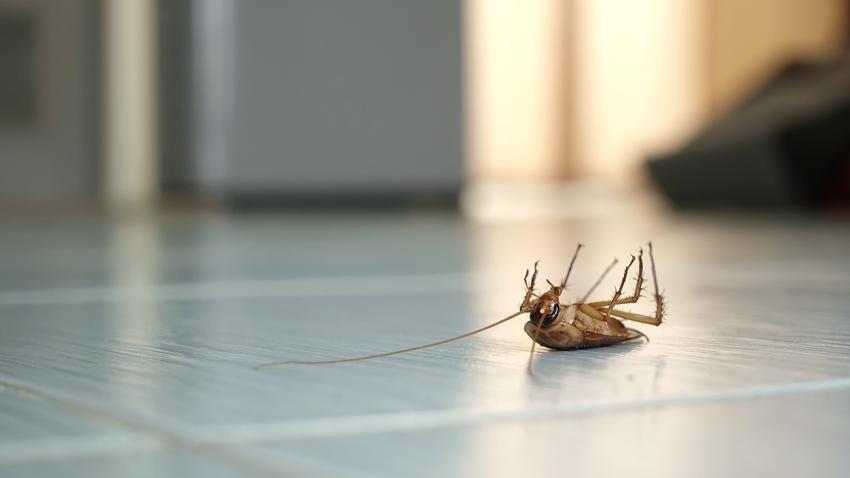 Średni koszt dezynsekcji prusaków, karaluchów i mrówek. Metoda żelowa, normalny stopień skomplikowania prac. Cena obejmuje wykonanie usługi w niewielkim lokalu mieszkalnym.