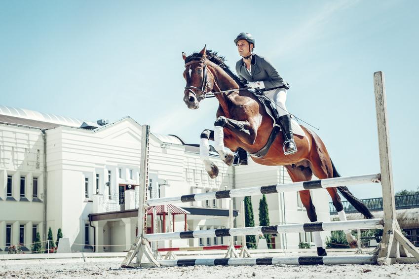 Średni koszt lekcji jazdy konnej dla zaawansowanych. Cena za godzinną lekcję z doświadczonym instruktorem. Szkoła jeździecka z pośredniej póki cenowej.