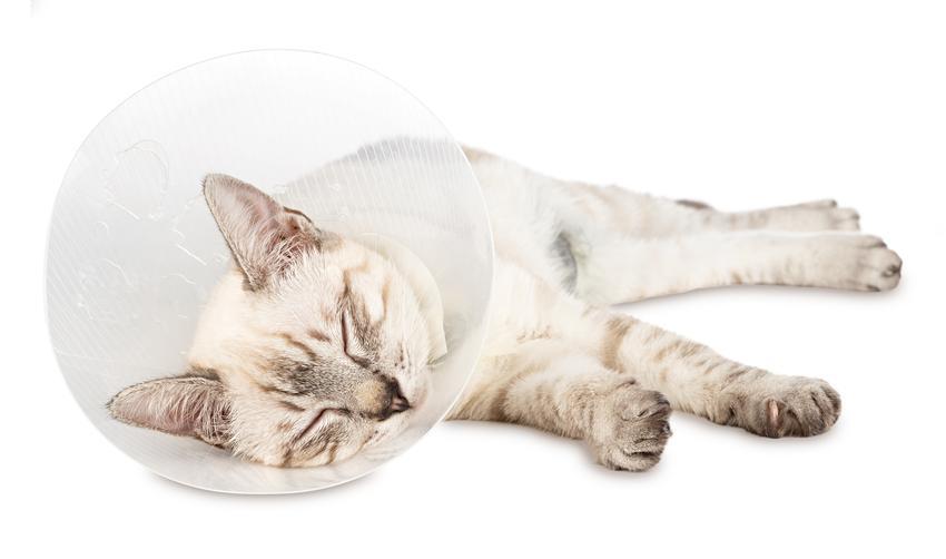 Średni koszt wykonania kastracji kota. Normalny stopień skomplikowania zabiegu, gabinet wterynaryjny z pośredniej półki cenowej.