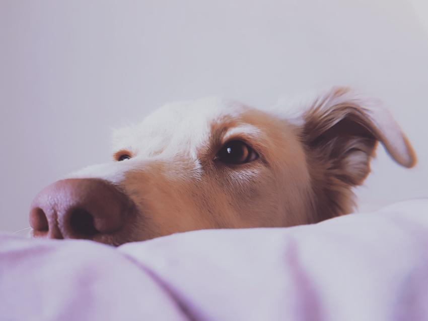 Średni koszt utylizacji psa lub kota przez weterynarza. Pies średniej wielkości.