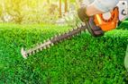 Cennik przycinania roślin 2021 w ponad 150 miastach w Polsce