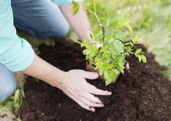 Cennik sadzenia krzewów 2021 w ponad 150 miastach w Polsce
