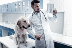 Cena badania kału psa na obecność pasożytów w 150 miastach w Polsce