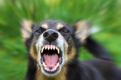 Ceny szczepienia psa przeciwko wściekliźnie w ponad 160 miastach w Polsce