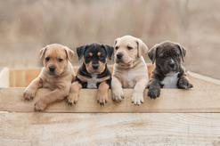 Ceny psich przedszkoli w ponad 160 miastach w całej Polsce