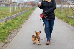 Ceny szkolenia psów w ponad 160 miastach w całej Polsce
