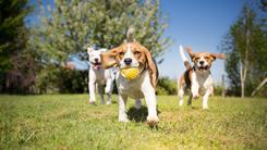 Ceny zajęć Rally-O dla psów w ponad 160 miastach w całej Polsce