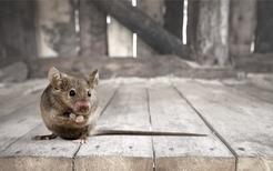 Cennik zwalczania myszy w ponad 160 miastach w całej Polsce
