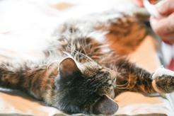 Cena sterylizacji kotki w ponad 160 miastach w całej Polsce