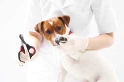 Cena obcinania pazurów u psa i kota w 160 miastach w Polsce