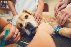 Cena eutanazji psa lub kota - sprawdź, ile kosztuje taki zabieg