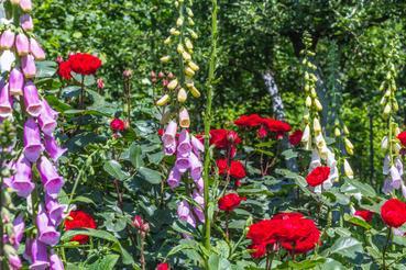 Kwiaty Ogrodowe Rodzaje Porady Popularne Odmiany Sposoby Uprawy I Pielegnacji